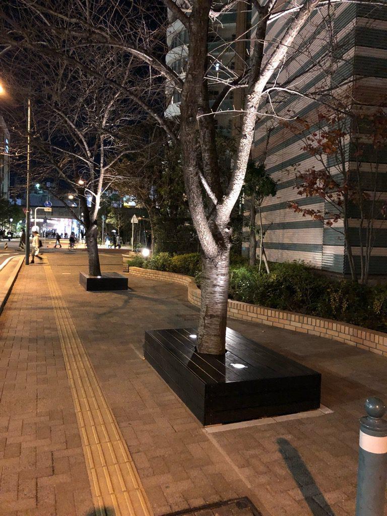 No.310 桜並木の改善完了