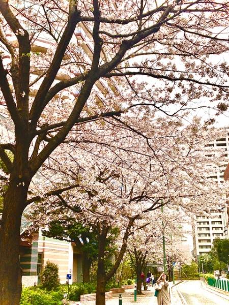 No.457  春の風景